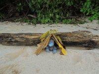 034_Turtle.._adventures.jpg