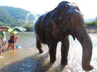 045_Elepha.._bath_time_.jpg