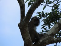 070_Boat_t..led_macaque.jpg