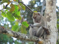 134_Aftern..led_macaque.jpg