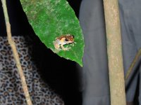 160_Night_..-_tree_frog.jpg