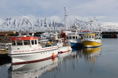 Boats In The Harbour In Dalvik