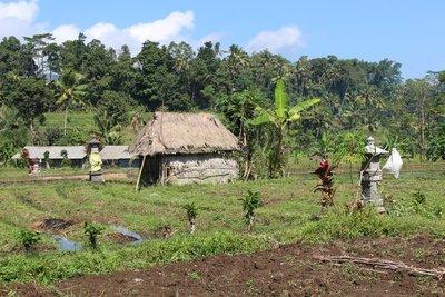 Bali Landscape