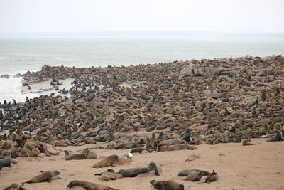 Seal Colony - Cape Cross