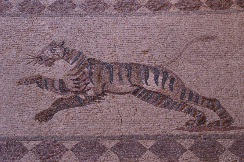 Tiger Mosaic Kato Paphos