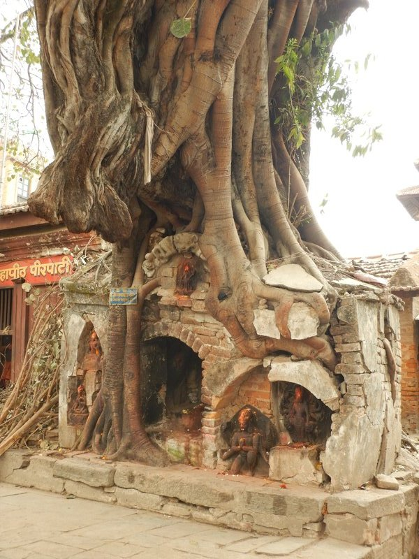 Temple in the tree