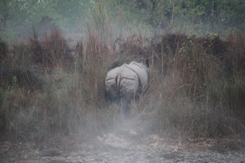 Rhino disappearing into the mist