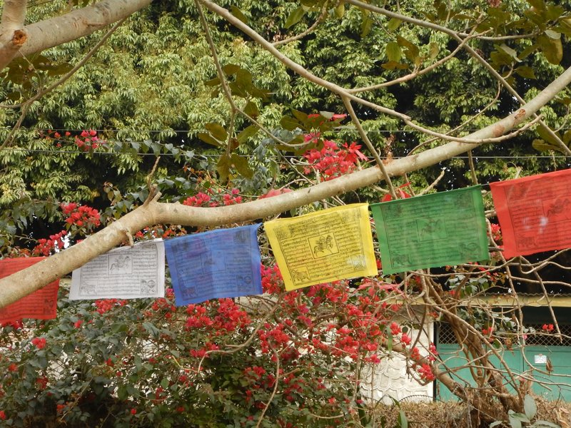 Prayer Flags in Pokhara