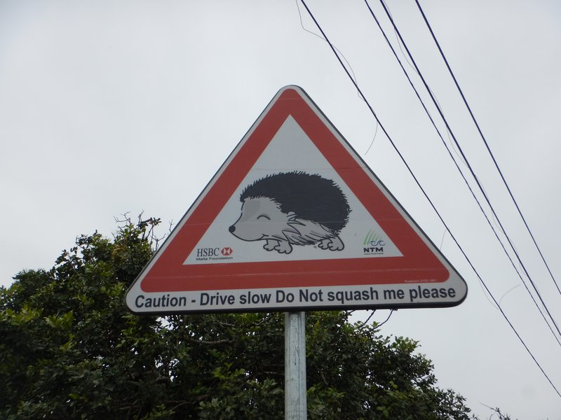 Watch Out Hedgehogs Crossing