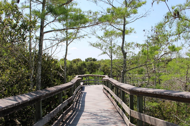 Boardwalk on the Pa-Hay-Okee Trail, Everglades NP