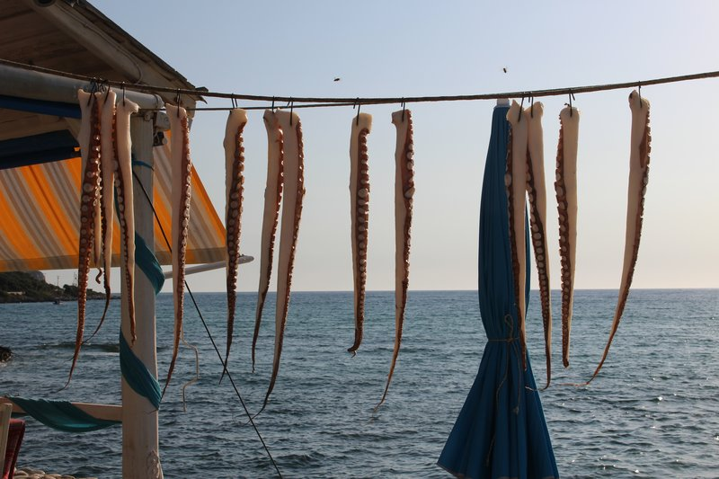 Octopus hanging out to dry