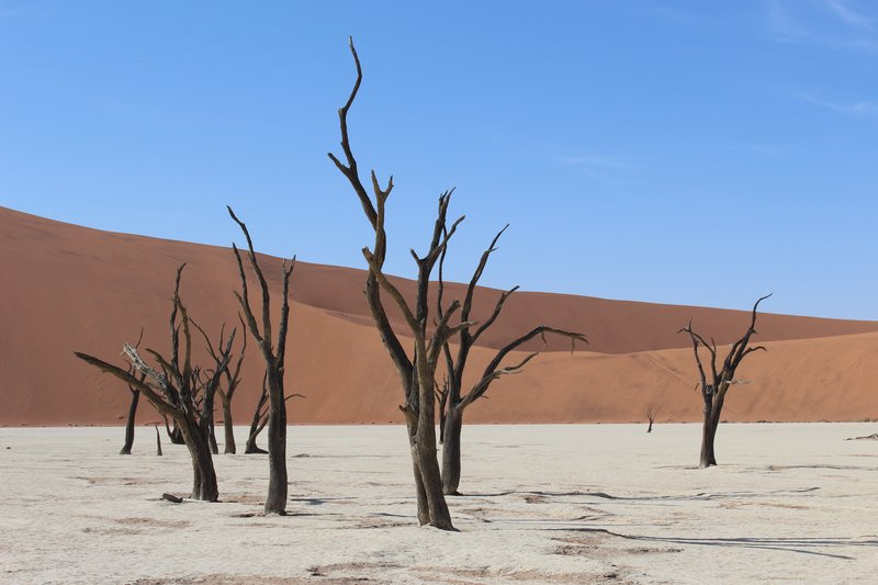 Dried Acacia Trees - Dead Vlei