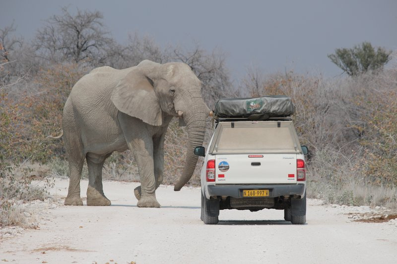 Elephant's Right of Way