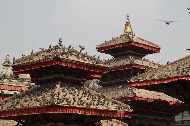 Pigeons on the temple rooves