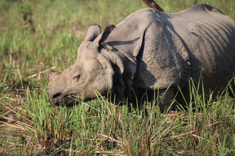 One of many rhino we saw in Chitwan