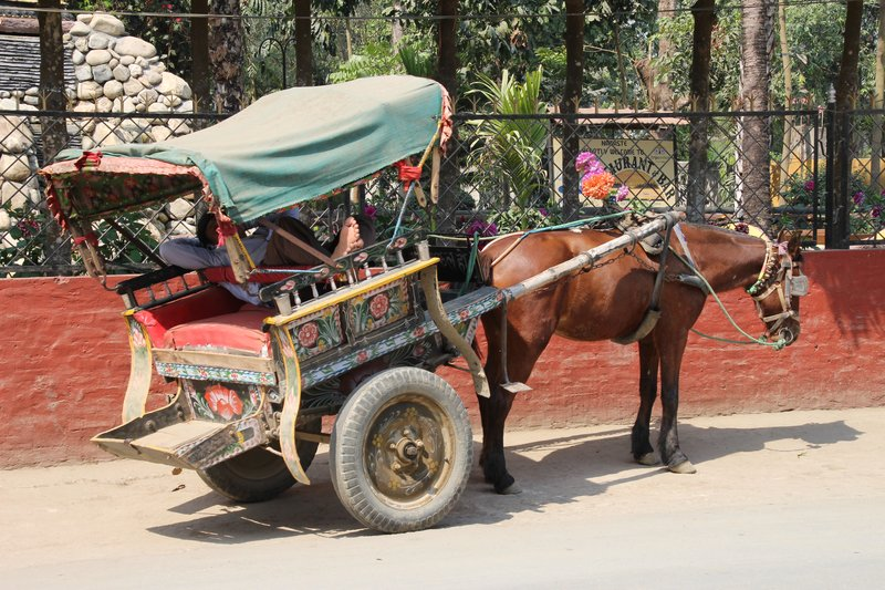 Horse and Cart in Sauraha