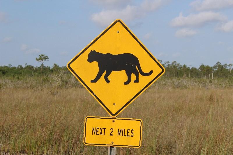Florida Panther Warning Sign