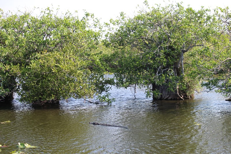 Everglades View
