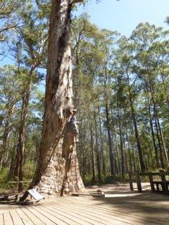 Dad pretending to climb Diamond Tree