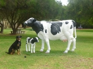 I know they're only pretend cows