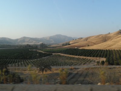 West of the 2 parks where entrances are, the giant Central Valley was green with all manner of orchards and produce.