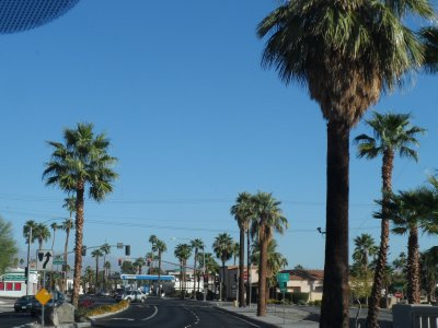 The streets of Palm Springs are lined with -- you guessed it! -- palms!