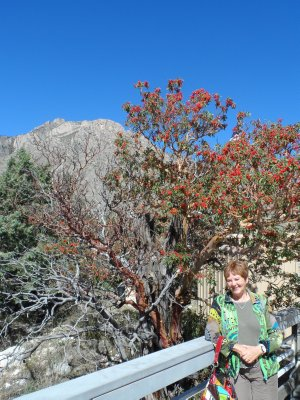 Sharon with the Texas Madrone tree