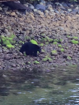 Tofino Bear Watching Cruise