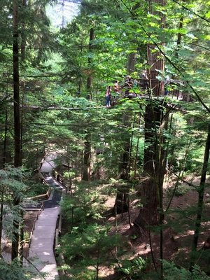Capilano Suspension Bridge Treetop Walk, Vancouver