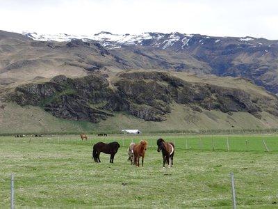 Iceland_-_NY_032.jpg