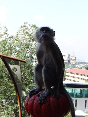 Monkeys_at_the_cave.jpg