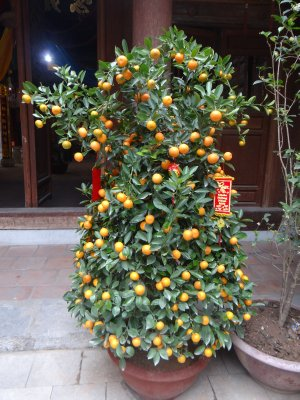 Vitnamese_christmass_tree.jpg
