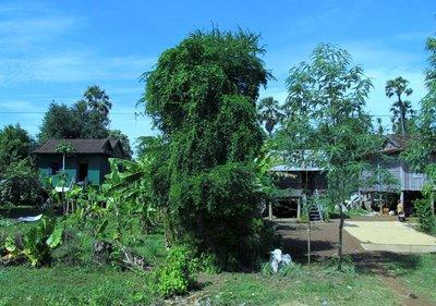 cambodia_021.jpg