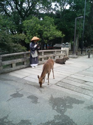 Monk and Deer