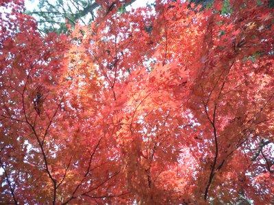 Autumn Sky (through the trees)