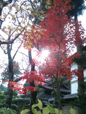 Autumn Sky (through the trees) II