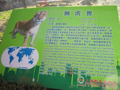 blogShanghai0033