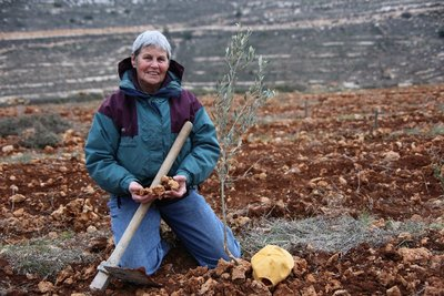 Planting an Olive Tree in the Holy Land 2