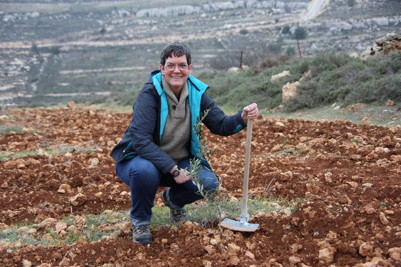 Planting an Olive Tree in the Holy Land 1