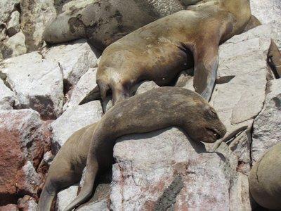 Snoozy seals