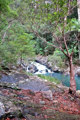 Conondale_National_Park_4.jpg