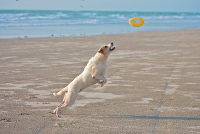 Tyson playing Frisbee at Cable Beach