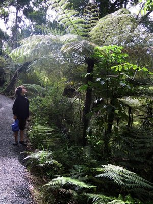 Whopping big tree fern