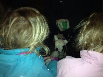 Lammetjes eten geven op de Camping van de boer