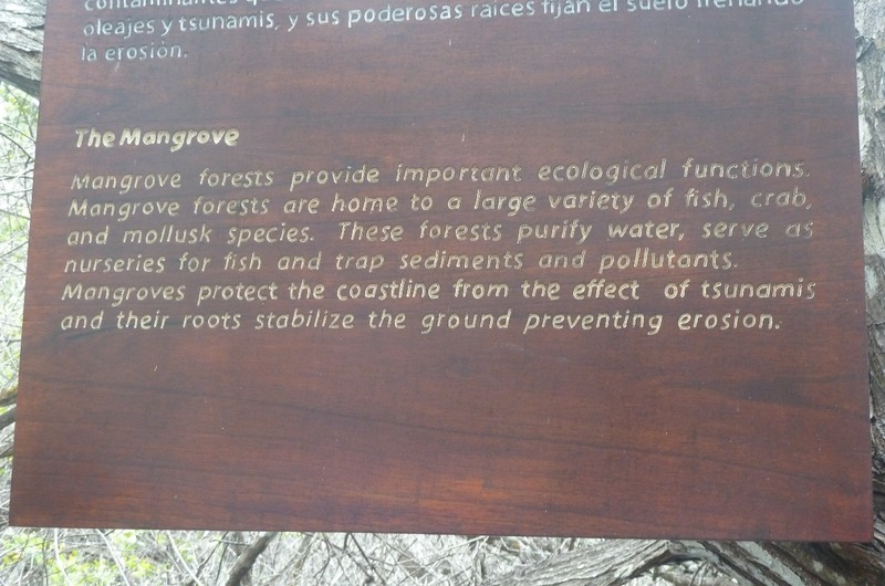 Mangrove information