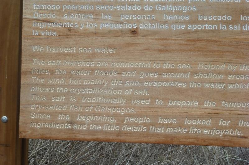 Salt mine information