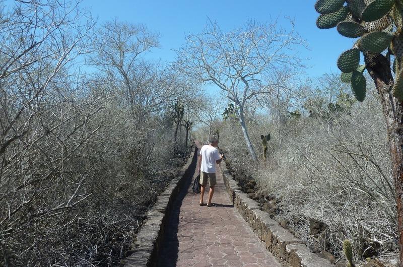 Tortuga Bay walkway