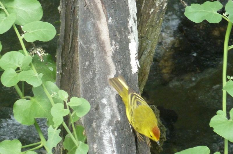 Finch spotting