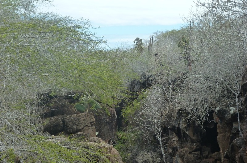 Nearby landscape