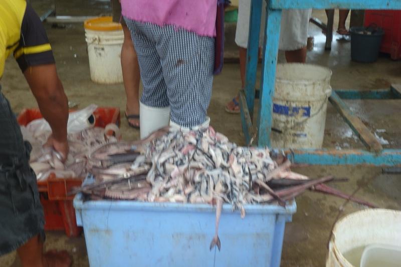 Fish market Puerto Lopez